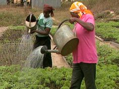 Agriculture Conference Focuses on Africa-Owned Science