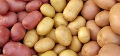 Potato Day. - August 19