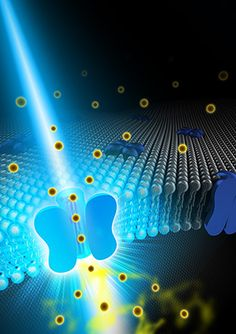 New optogenetics process could lead to neurological enhancements and treatments…