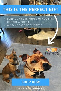 Cute Animal Memes, Animal Jokes, Cute Funny Animals, Baby Animals Pictures, Cute Animal Photos, Baby Animals Super Cute, Cute Little Animals, Dog Training School, Cute Dogs And Puppies