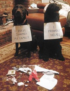 Top 10 Funny Dog Pictures With Captions That Make You Laugh Like Crazy. Just Innocent Dog Shaming. Dog Pictures, Animal Pictures, Funny Pictures, Awsome Pictures, Funny Dogs, Funny Animals, Cute Animals, Funniest Animals, Funny Puppies