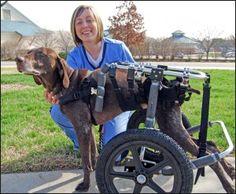 veterinarian technician