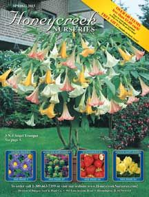 DirectGardening's One Cent Sale! - Trees, Flowers, Seeds, Bulbs, Daylilies, Perennials