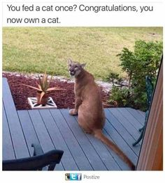 Funny Animal Memes, Funny Animal Pictures, Cute Funny Animals, Cat Memes, Funny Cute, Cute Cats, Hilarious, Animal Pics, Funny Memes