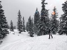 Surf - Snow - Skate