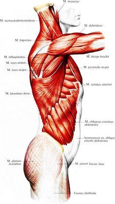 Пластическая анатомия человека и референсы 18+