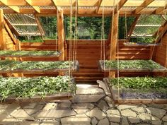 Small-Scale Medicinal Herb Farming: A (Very) Personal Journey Pictured: Greenhouse Turned Drying House Outdoor Greenhouse, Greenhouse Plans, Green House Design, Herb Farm, Mother Earth News, Homestead Survival, Urban Farming, Farming Farming, Drying Herbs