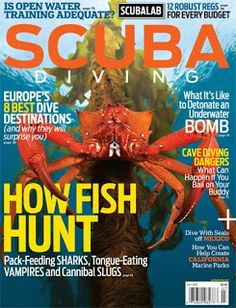 how do fish hunt?
