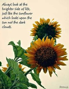 """""""Always look at the brighter side of life, just like the sunflower which looks upon the sun not the dark clouds."""" Love this 💛🌻 Words Quotes, Wise Words, Me Quotes, Sayings, Beautiful Words, Beautiful Flowers, Flower Quotes Love, Floral Quotes, Great Quotes"""