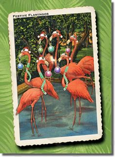 Our Flamingos Holiday Cards send festive holiday greetings from your entire flock. Original tropical Christmas card artwork inspired by antique postcards. $12. per pack of 8 cards and envelopes