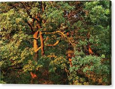 Autumn Canvas Print featuring the photograph Golden Branches by Ren Kuljovska Canvas Art, Canvas Prints, Nature Artists, Nature Artwork, Photo Tree, Photos For Sale, Great Artists, Branches, Painted Rocks