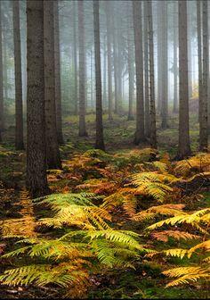 Misty morning in the woods by Martin Krajczy (Germany)