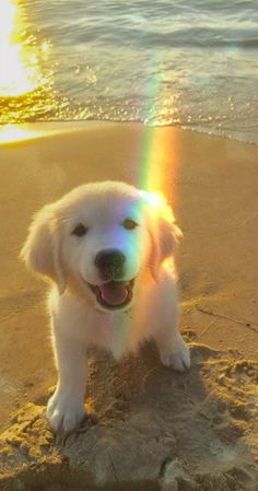puppies on beach - puppies on beach . puppies at the beach . cute puppies at the beach . cute puppies on beach . cute puppies golden retriever the beach Super Cute Puppies, Cute Baby Dogs, Cute Little Puppies, Cute Dogs And Puppies, Cute Little Animals, Cute Funny Animals, Doggies, Funny Dogs, Puppies Puppies