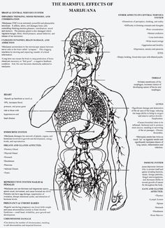 The Harmful Effects of Alcohol Poster explains the long