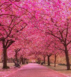 Greenwich Park, London