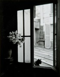 The cat behind the window, Gordes, 1957, Willy Ronis. (1910 - 2009)