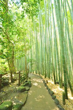"""春から初夏の頃は、散策するのに絶好の季節です。サラサラと音を奏で、木漏れ日がきらめく""""竹林""""に一歩足を踏み入れば、静けさと清涼感に包まれ、心が洗われるような一時を味わえます。""""竹林""""が見事な「報国寺」と周辺の散策スポットを紹介します。ぜひ鎌倉へ足を運び、偶には心静かに竹林を巡り歩きましょう。"""