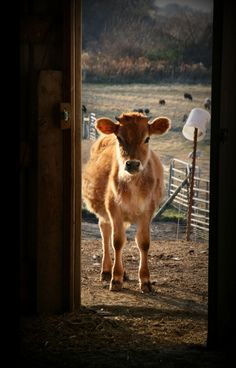 Down on the farm. Amor Animal, Mundo Animal, Country Farm, Country Life, Country Living, Barn Animals, Cute Animals, Beautiful Creatures, Animals Beautiful