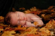 Fall themed newborn photos - Click image to find more Photography Pinterest pins