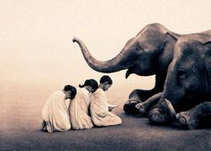 Sitting with elephants, by Gregory Colbert.