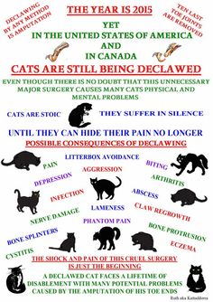 DO NOT DECLAW....BAN DECLAWING