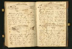 Lewis and Clark journal drawings | Lewis & Clark Journal Entries ...