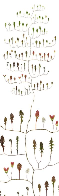these stunning tree collages by Swedish artist Lotta Olsson are helping me believe that spring is on it's way. So delicate, so detailed and just lovely enough to distract me while that last bit of snow melts. Gorgeous.