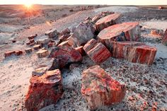 Go Out on a Limb at Petrified Forest National Park, Arizona : 21 Family Must-Stops Along Route 66 : TravelChannel.com