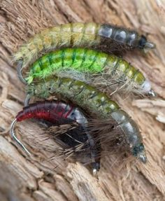 Caseless Caddis Larva - Articles