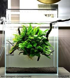 Favourites: tank by Grzegorz Grzegorowskí A delicate floating low-tech plant ball with wood, ferns, anubias and mosses. Nice!