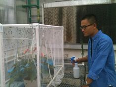 Fengchun Yang keeps his population of black soldier flies moist, happy and continuously reproducing as he tests their potential as a protein source in chicken feed at a Penn State greenhouse. Penn State College, Black Soldier Fly, Fly Love, Agricultural Science, Fly Traps, Chicken Feed, Bearded Dragon, Aquaponics, Protein