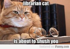 Librarian Cat Is About To Shush You
