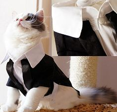 Amazon.com : i'Pet Handsome Prince Cat Bridegroom Wedding Tuxedo Faux Twinset Design Small Boy Dog Formal Attire Doggy Party Wear Puppy Birthday Outfit Doggie Photo Apparel with Buttons Holiday Fabric Clothes Halloween Classics Collection Costume (Black Tuxedo, Large) : Pet Supplies