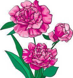 Beautiful Clip Art Of Flowers: Peony