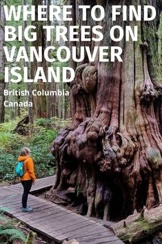 Where to Find Big Trees on Vancouver Island, British Columbia With a huge amount of rainfall and a Victoria Vancouver Island, Vancouver Travel, Victoria Island Canada, British Columbia, Columbia Travel, Road Trip, Canadian Travel, Western Canada, Visit Canada
