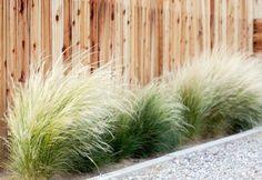 Budget Landscape Front Yard Makeover Succulents ; Gardenista