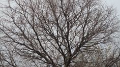 albero spoglio campagna siciliana.