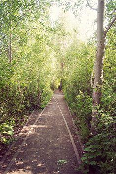 AM - losse lijnen in pad - Schoneberger Sudgelande Park, Berlijn, Duitsland - Odious