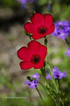Stunning colors