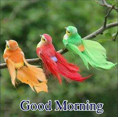 mini artificial foam feather bird wedding decorative doves bird home decorIJ Good Morning Happy Sunday, Good Afternoon, Good Evening Greetings, Wedding Doves, Artificial Birds, Photos For Facebook, Image New, Dove Bird, Owl Pet