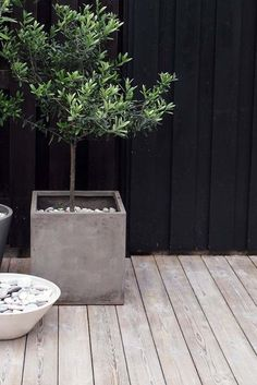 Garden Design - Minimalistic Ideas and Notes for your garden Garten Notizen / Garden Notes In modern cities, it is nearly impossible to sit in the house with a yard, particularly in. Interior Design Magazine, Planter Olivier, Olivier En Pot, Black Fence, Black Garden Fence, White Fence, Concrete Planters, Cement Patio, Concrete Deck