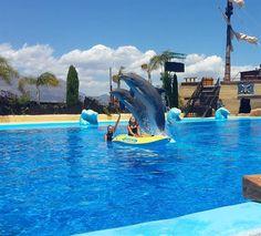 Zwemmen met dolfijnen Mundomar