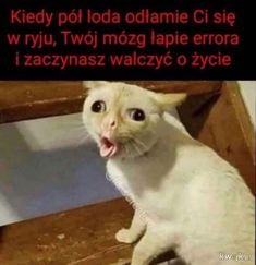 Russian is hard Very Funny Memes, Wtf Funny, Animals And Pets, Funny Animals, Funny Lyrics, Polish Memes, Weekend Humor, Funny Mems, Haha