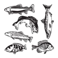 "Style and Apply Fishes Wall Decal Size: 24"" H x 24"" W, Color: Orange"