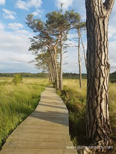 Thursley Common National Nature Reserve in Surrey has boardwalks which extend to over 3/4 of a mile over the water and boggy areas of the nature reserve.  The boardwalks allow everyone, including disabled visitors, access to this very special place, where you can see sundews, and an array of rare and interesting flora and fauna.