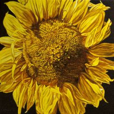 "Robert Lemay SUNFLOWER IV / Canada House Gallery - oil, canvas 24"" x 24"""