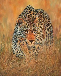 Stalking Leopard Print By David Stribbling