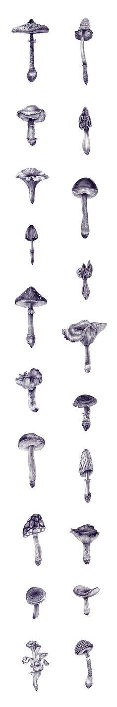 Mushroom explosion - Ei Ka More