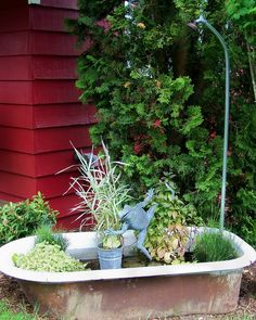 tub fountain.....showering frog Small Water Gardens, Container Water Gardens, Back Gardens, Container Gardening, Garden Bathtub, Temple Gardens, Outdoor Water Features, Pond Fountains, Pond Plants