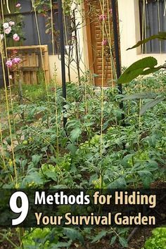 9 Methods for Hiding Your Survival Garden - Imagine this: the SHTF but you have your survival garden. One morning you go outside to harvest some corn, but you stop dead in your tracks. The backyard gate has been kicked open, half the garden has been destroyed, and all the fruits and veggies are gone.